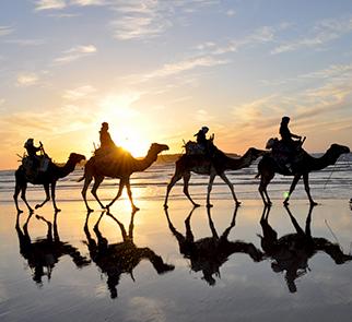 balade chameaux agadir